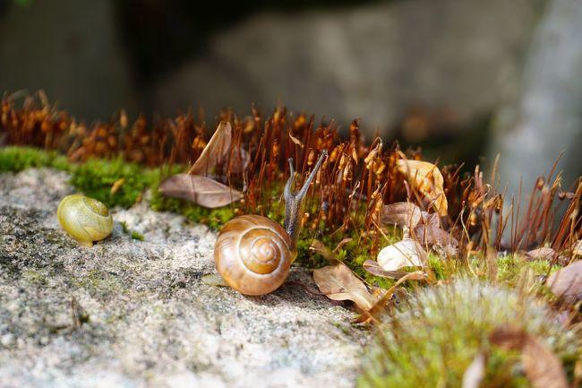 Day Deceleration Fragility Nature No People Selective Focus Snail Shells Snail🐌