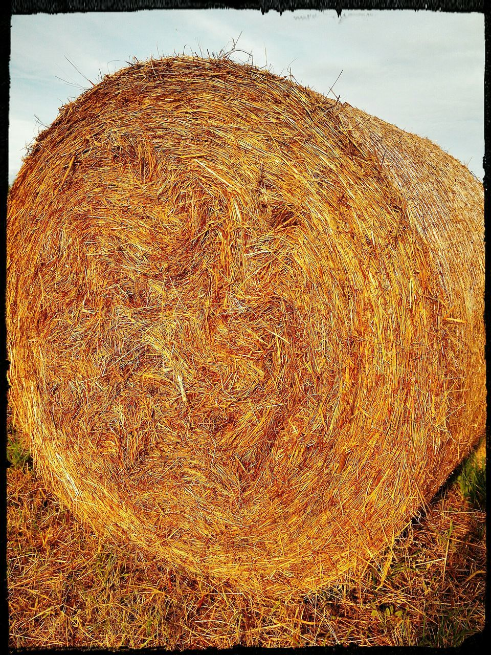 hay, bale, hay bale, field, rolled up, outdoors, landscape, agriculture, grass, day, straw, no people, nature, haystack, rural scene, sky, close-up