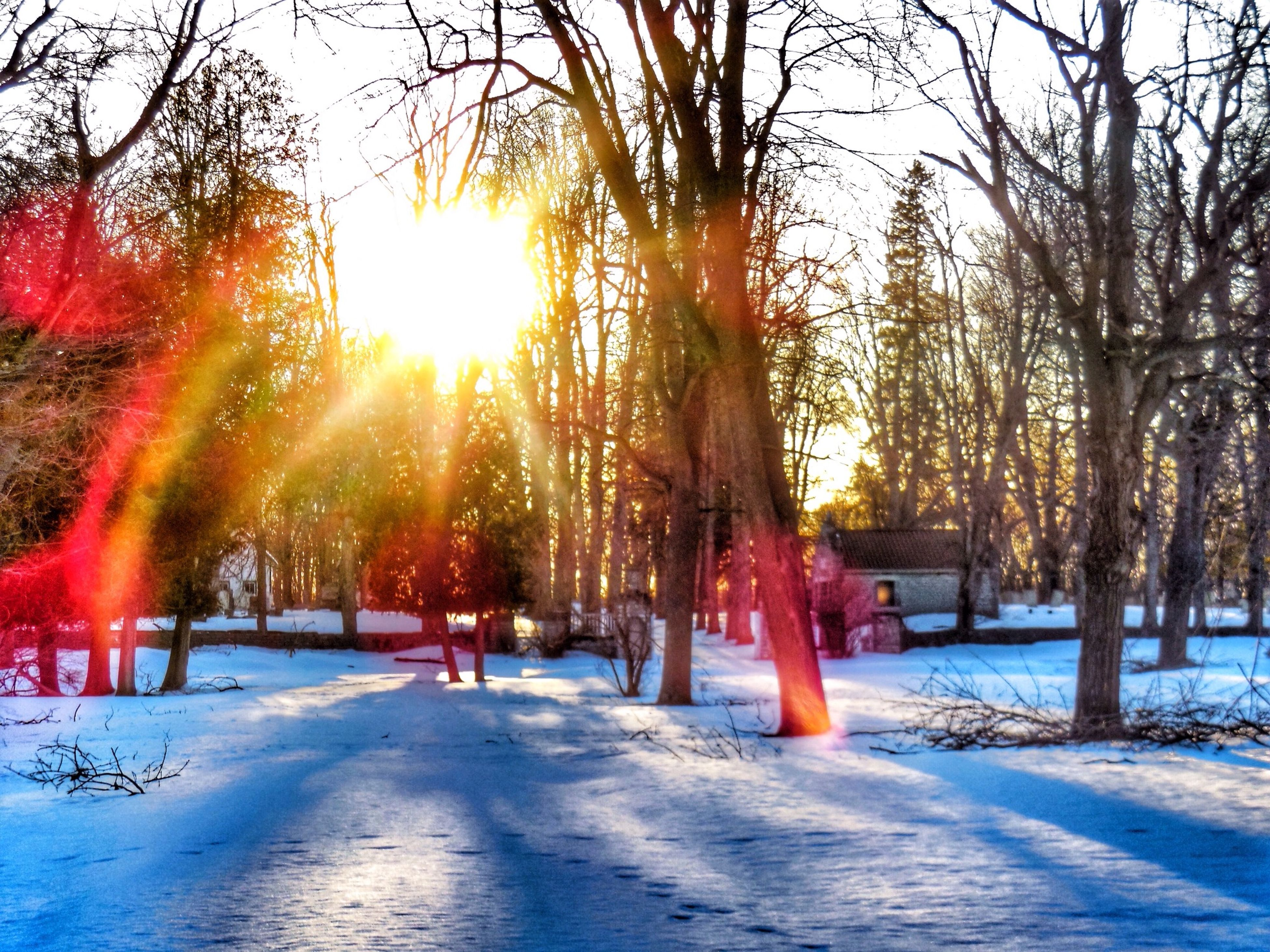 snow, winter, cold temperature, season, tree, weather, sun, covering, nature, sunlight, tree trunk, treelined, frozen, sunset, beauty in nature, the way forward, tranquility, tranquil scene, orange color, road