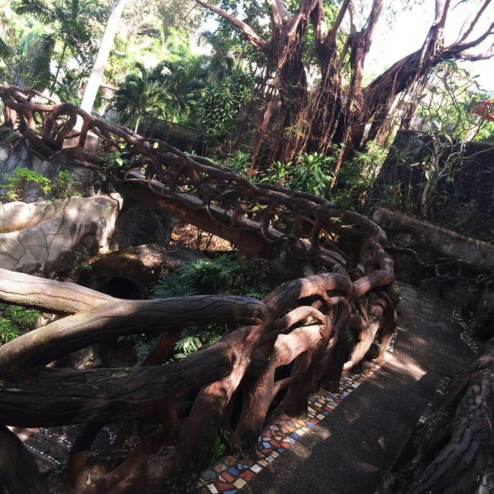 Out of the woods. Resort Woods Bridge Brown View Antipolo Christina Villas Amazing Photography Trees Philippines Check This Out Green Environment Amazing Antipolo City Out Of The