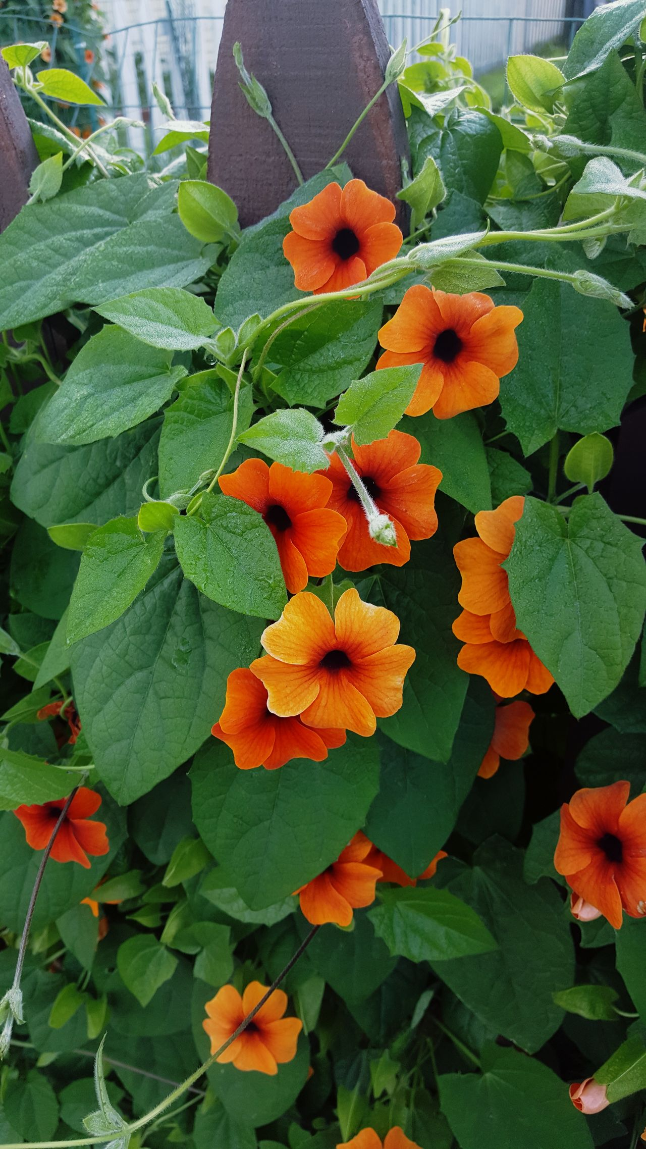 Growth Nature Orange Color Flower Leaf Beauty In Nature Green Color Plant Freshness Fragility No People Day Outdoors Flower Head Close-up No Filter Offthebeatenpath Urban Landscape Color Photography Beauty In Nature Green Vine Fence Overgrown And Beautiful Flowers Live For The Story