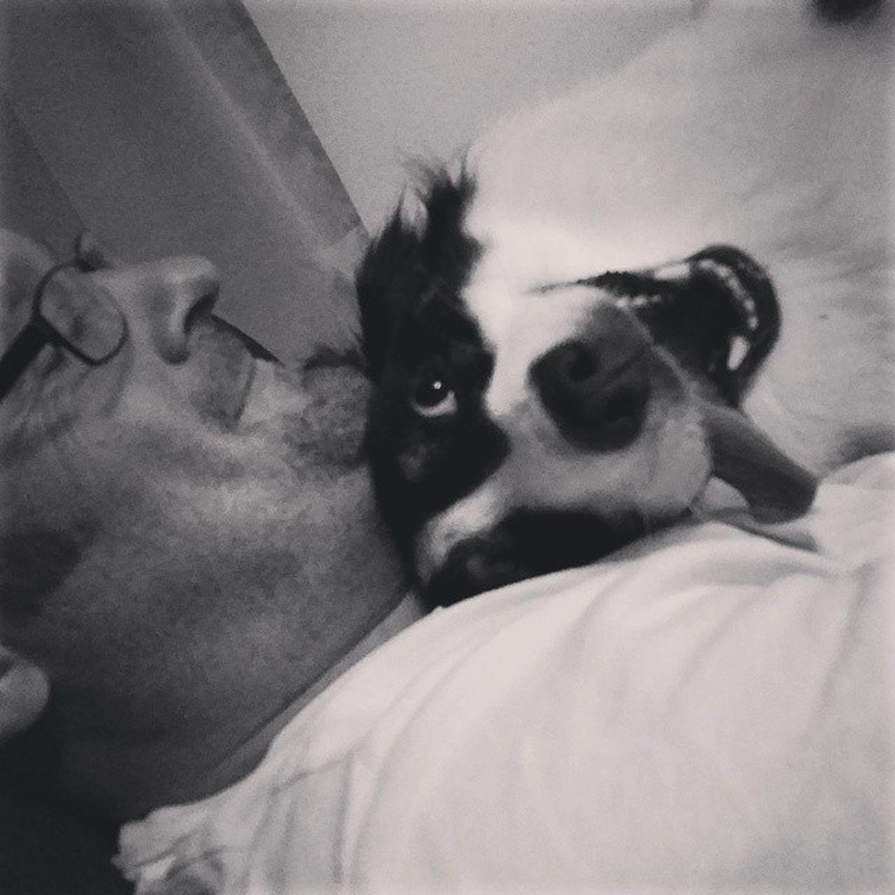 Happy Dogday from @rivergeek and his Derp Lily! Dogsofinstagram Aussiesofinstagram australianshepherd