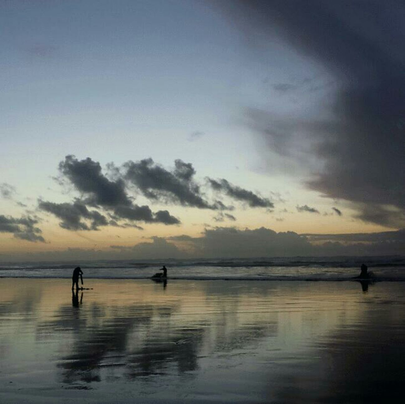 Beach Ocean Razor Clams Silhouette