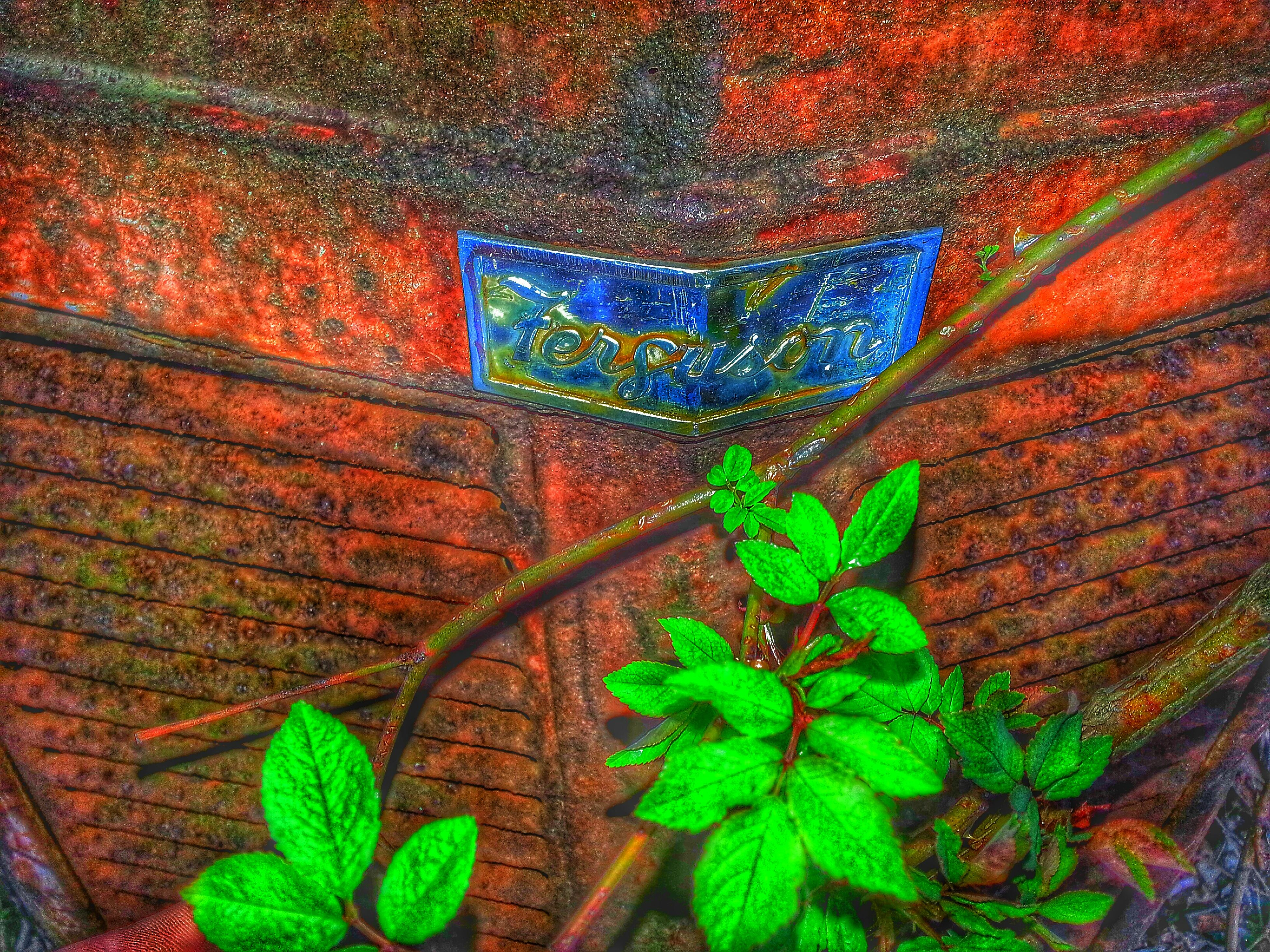 leaf, green color, plant, leaf vein, high angle view, close-up, wood - material, growth, textured, wall - building feature, nature, green, day, no people, outdoors, pattern, natural pattern, ivy, wooden, plank