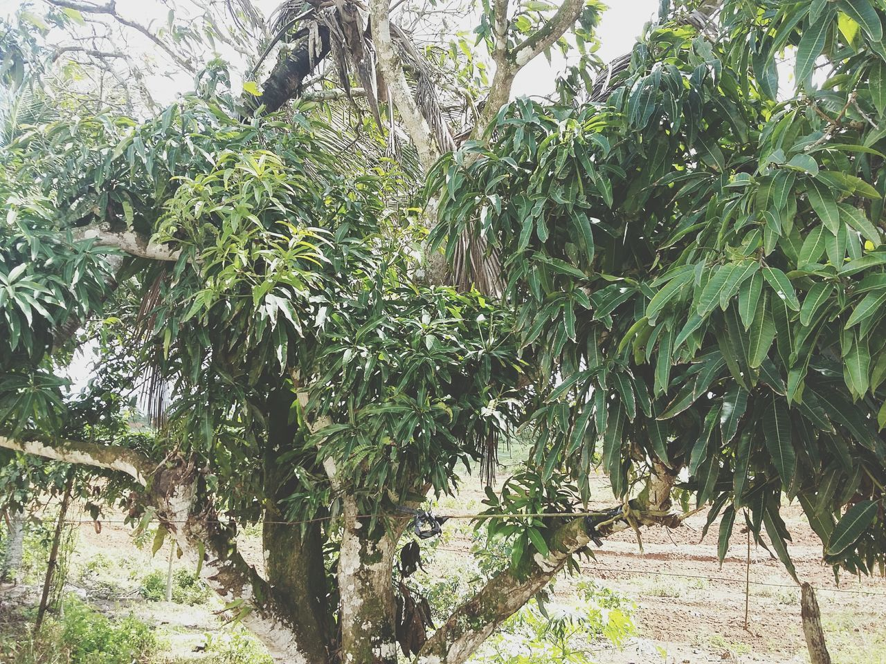 tree, nature, growth, plant, no people, leaf, day, outdoors