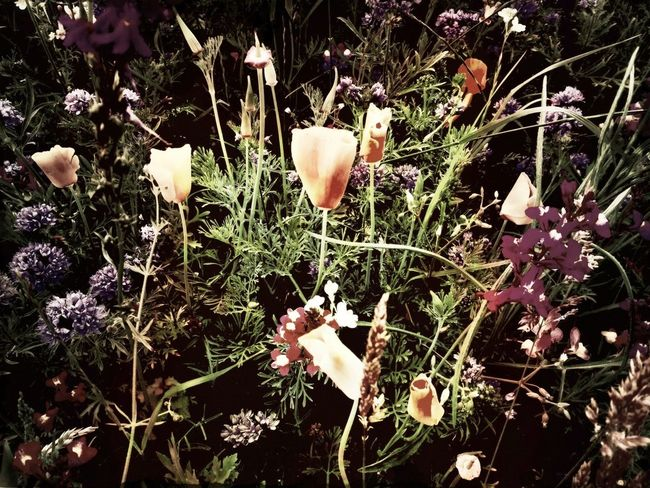 Shootermag Blautonswelt Eye4photography  Flower Fantasy