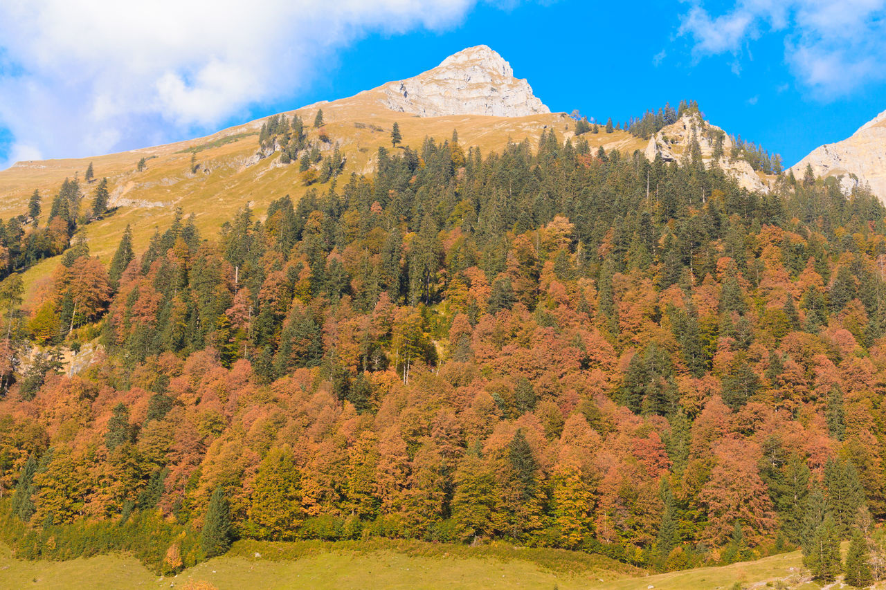 Karwendel mountain with Autumn at Ahornboden. Austria Autumn Autumn Mood Beauty In Nature Cloud - Sky Day Eng Hiking Hinterriß Kartenden Mountains Landscape Large Maple Back Maple Floors Mountain Nature No People Outdoors Risstal Scenics Sky Tranquil Scene Tranquility Tree Tyrol Vomp