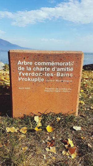 Amitié Arbre Souvenir Prokuplje Yverdon-les-Bains Myvaud Suisse  Switzerland 🇨🇭🇨🇭🇨🇭🇨🇭