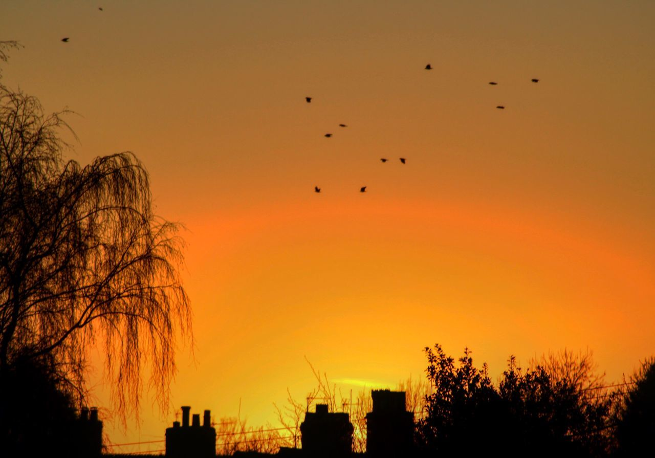 Sunset Flying Bird Silhouette Building Exterior Sky Architecture No People City Animal Themes Large Group Of Animals Built Structure Nature Beauty In Nature Outdoors Tree Flock Of Birds Cheshire Davenham