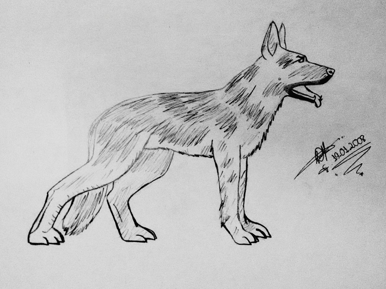 Desenho Art Grafite Drawing LM_colection Dog Artistic Dibujo Dog Pet Portrait