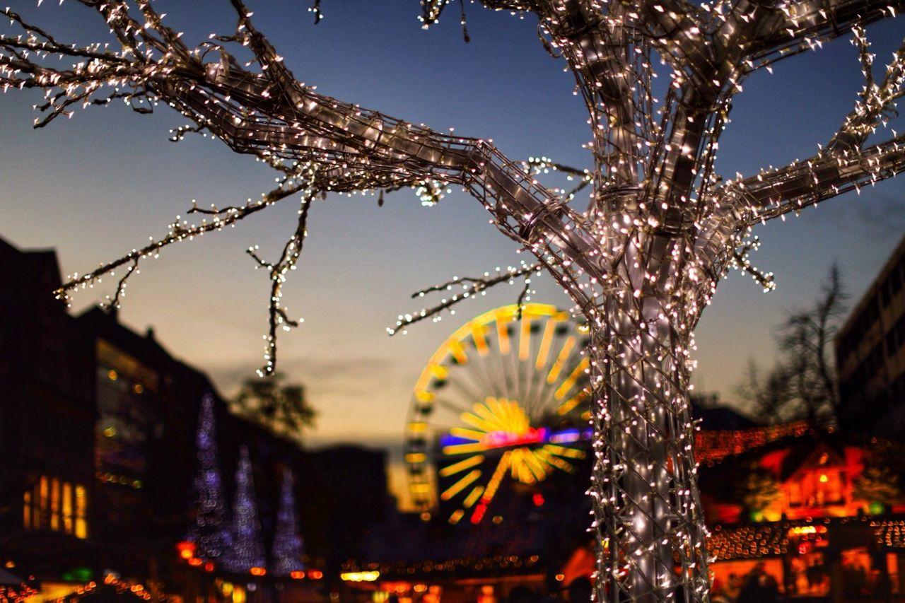 Beautiful stock photos of christmas, Bare Tree, Celebration, Christmas, Christmas Lights