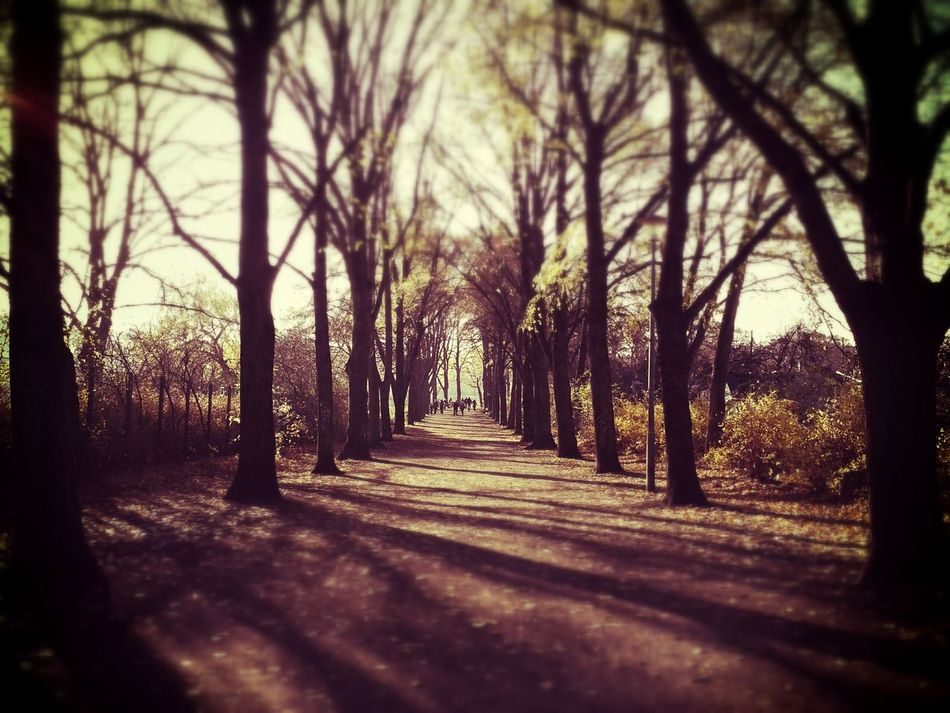 Just beautiful Peace And Quiet EyeEm Nature Lover Autumn Soistberlin