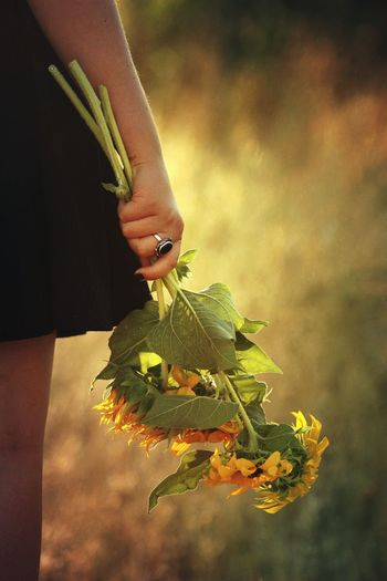 Sunflower Sunflowers Field Girl Holding Sunflowers Girl Holding A Flower Golden Hour Golden Bouquet Bouquet Of Sunflowers