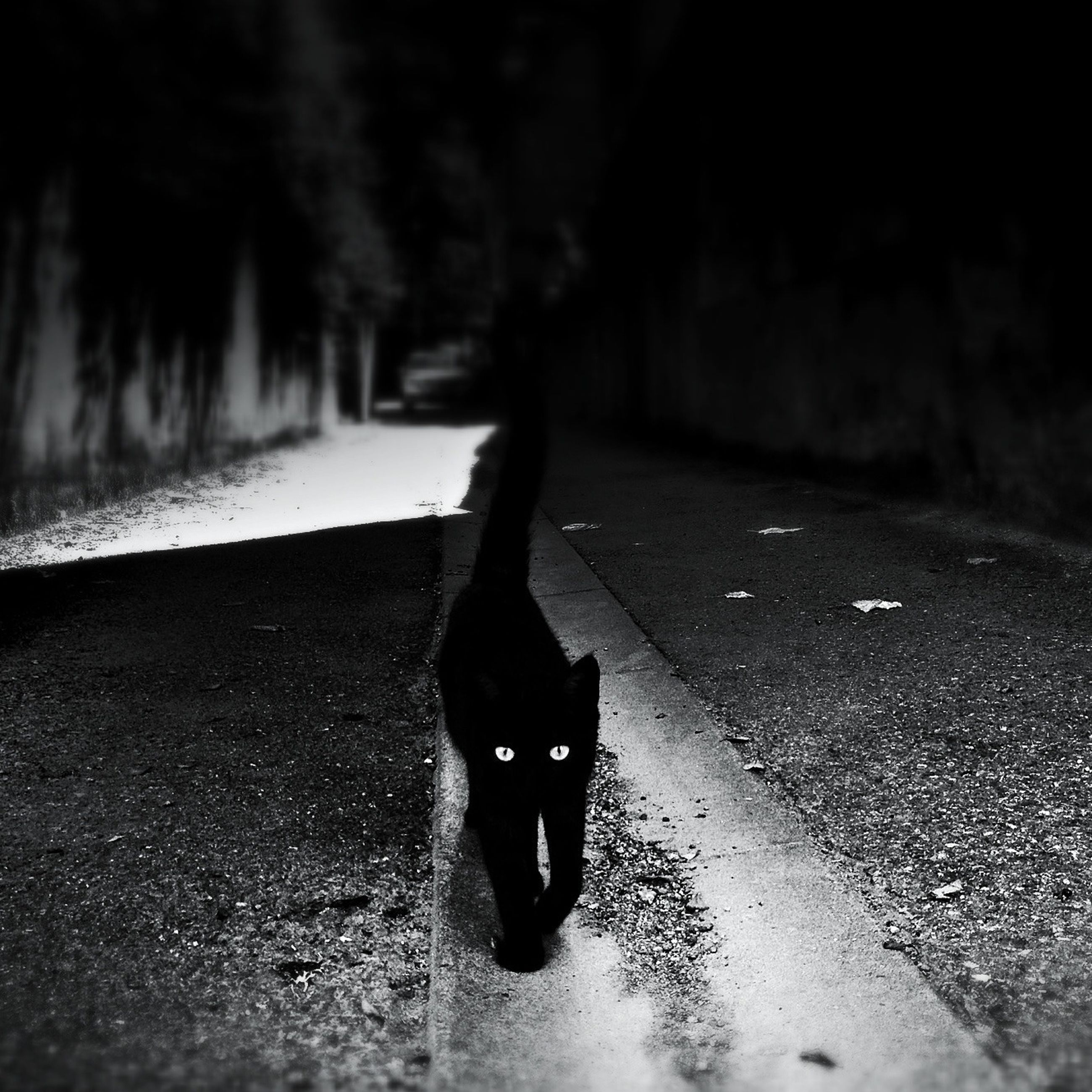 one animal, street, pets, black color, the way forward, road, asphalt, domestic animals, animal themes, dog, night, full length, walking, vanishing point, outdoors, high angle view, selective focus, transportation, footpath, no people