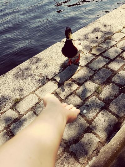 Haarlem Spaarne Next To AmsterdamNetherlands Holland Home Sunshine Check This Out Enjoying Life Chilling With A Duck Chilling In The Sun Followme Kwak Kwak Favorite Place To Be Nature's Diversities Sommergefühle Let's Go. Together. Hand