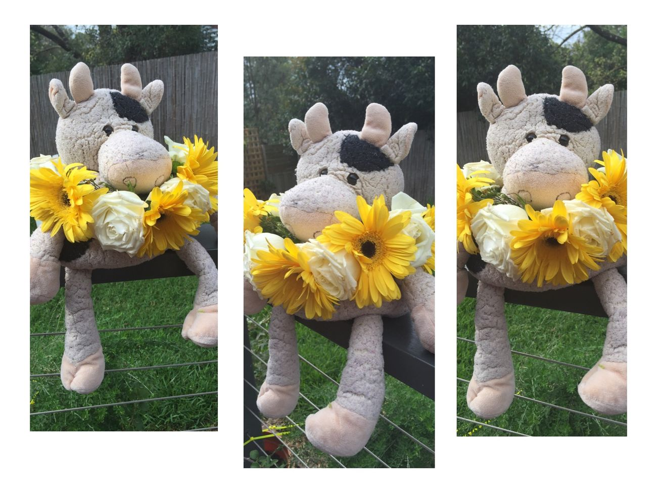 Cute stuffed cow toy with flower's 🐮🐮🐮🌼🌼🌼 Cow Toy Flowers Cute Photography