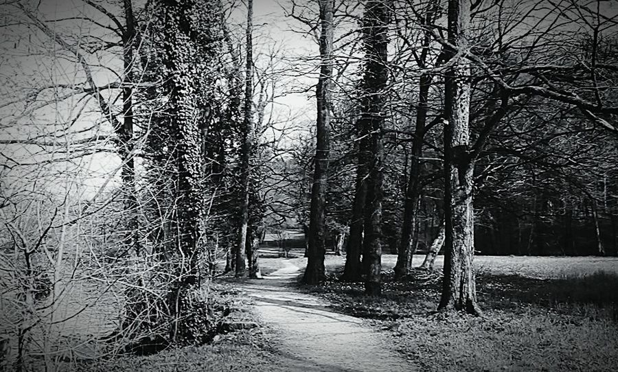 Found On The Roll Old Photo Otocec Beauty In Nature In Touch With Nature Insparation Road Trees Trees And Road