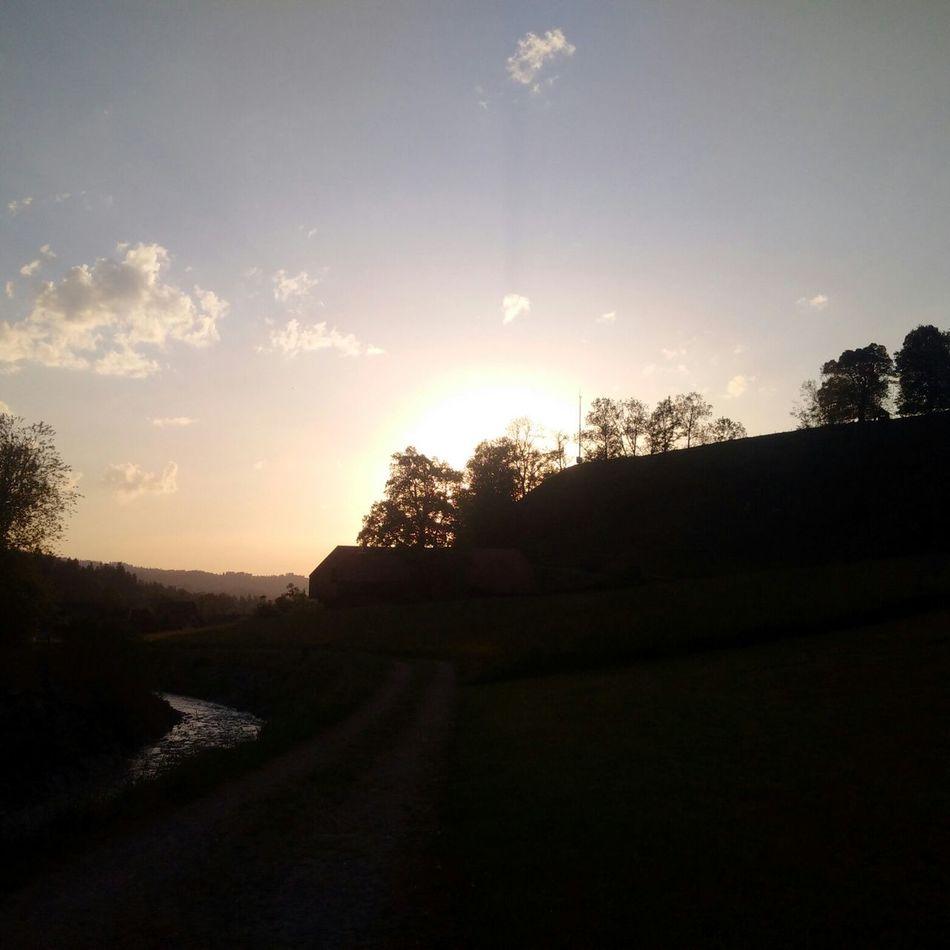 Sonnenuntergang Im Sommer Spazieren Und Fotografieren Hund