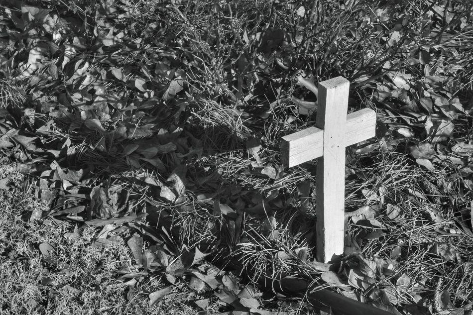 Cross Black And White Shadow Cross Shadow Garden Yard White Black Leaves Wood Wooden Cross Showcase March