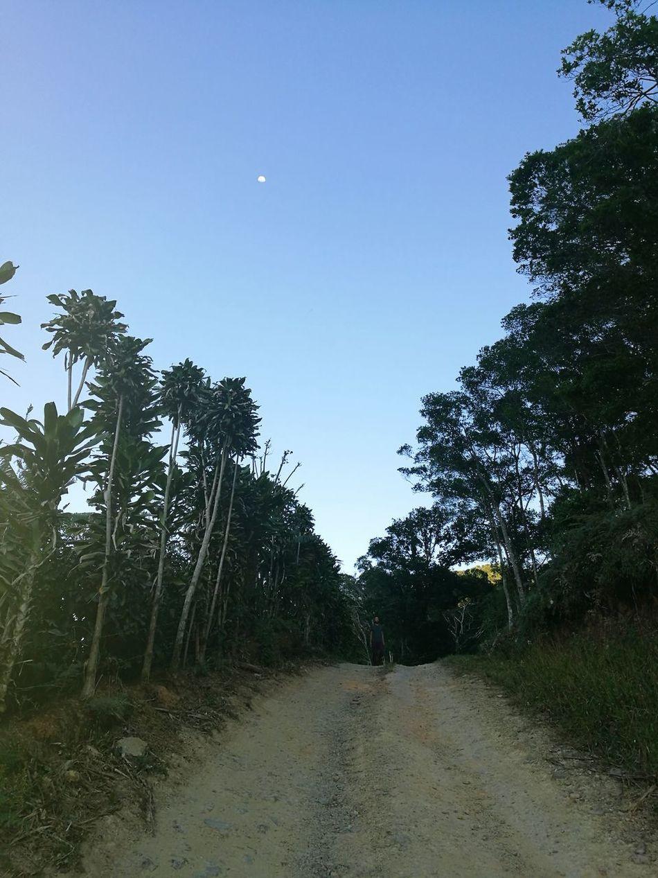 Mountain Coffee Plant Boy Moon Dota Costa Rica