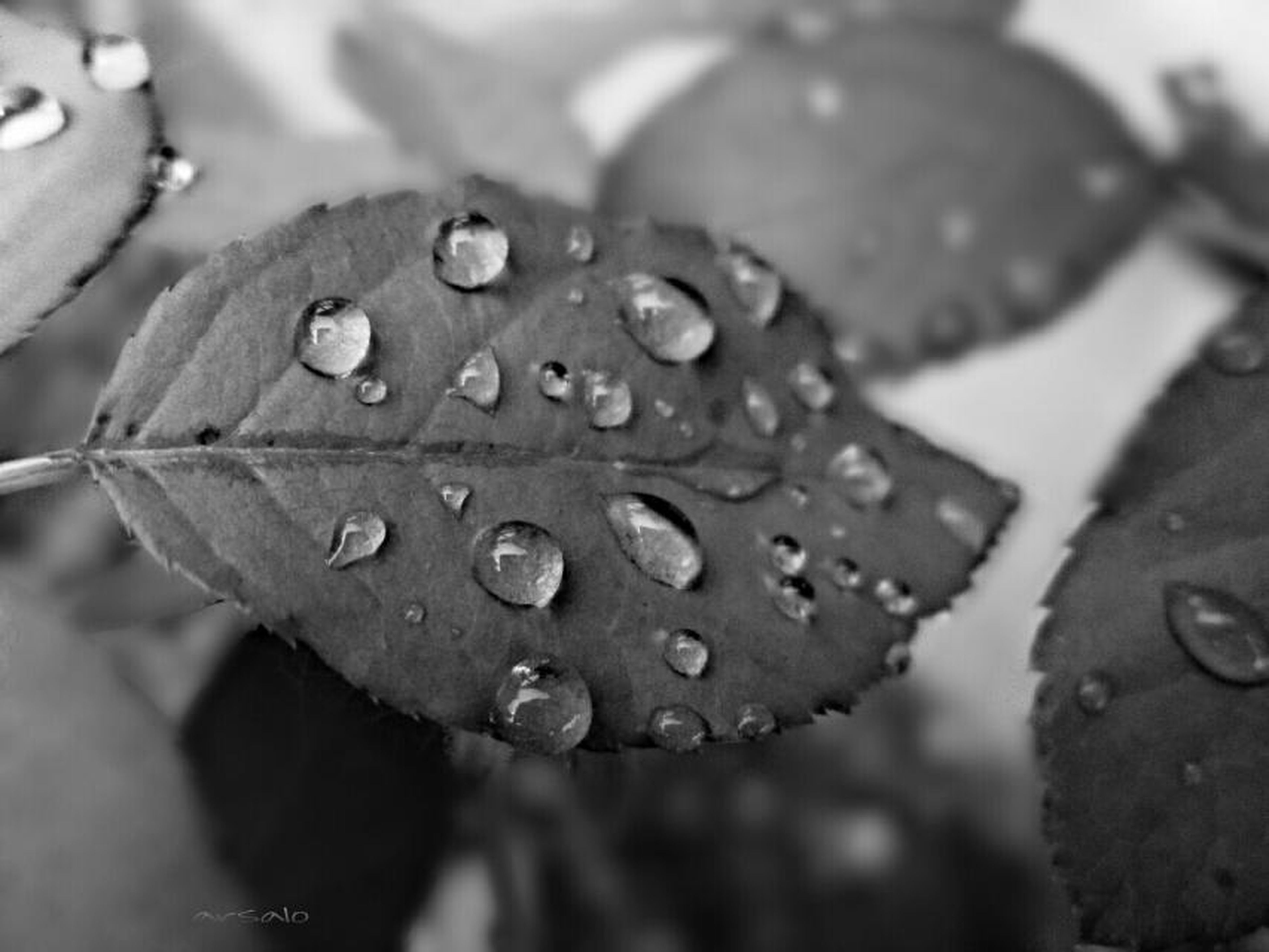 drop, water, wet, freshness, close-up, dew, fragility, raindrop, growth, focus on foreground, beauty in nature, flower, droplet, nature, leaf, rain, water drop, plant, petal, purity