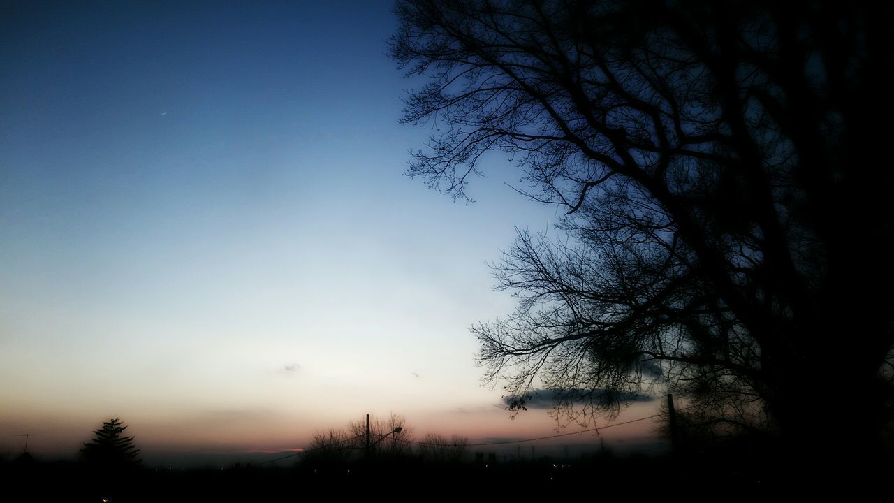 tree, beauty in nature, nature, silhouette, tranquility, no people, tranquil scene, scenics, sky, outdoors, bare tree, sunset, clear sky, branch, day