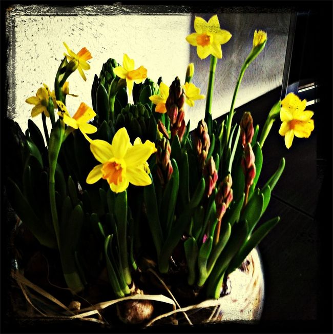 De lente on huis, 1 dag later. Nature The World Around Me Spring Flowers
