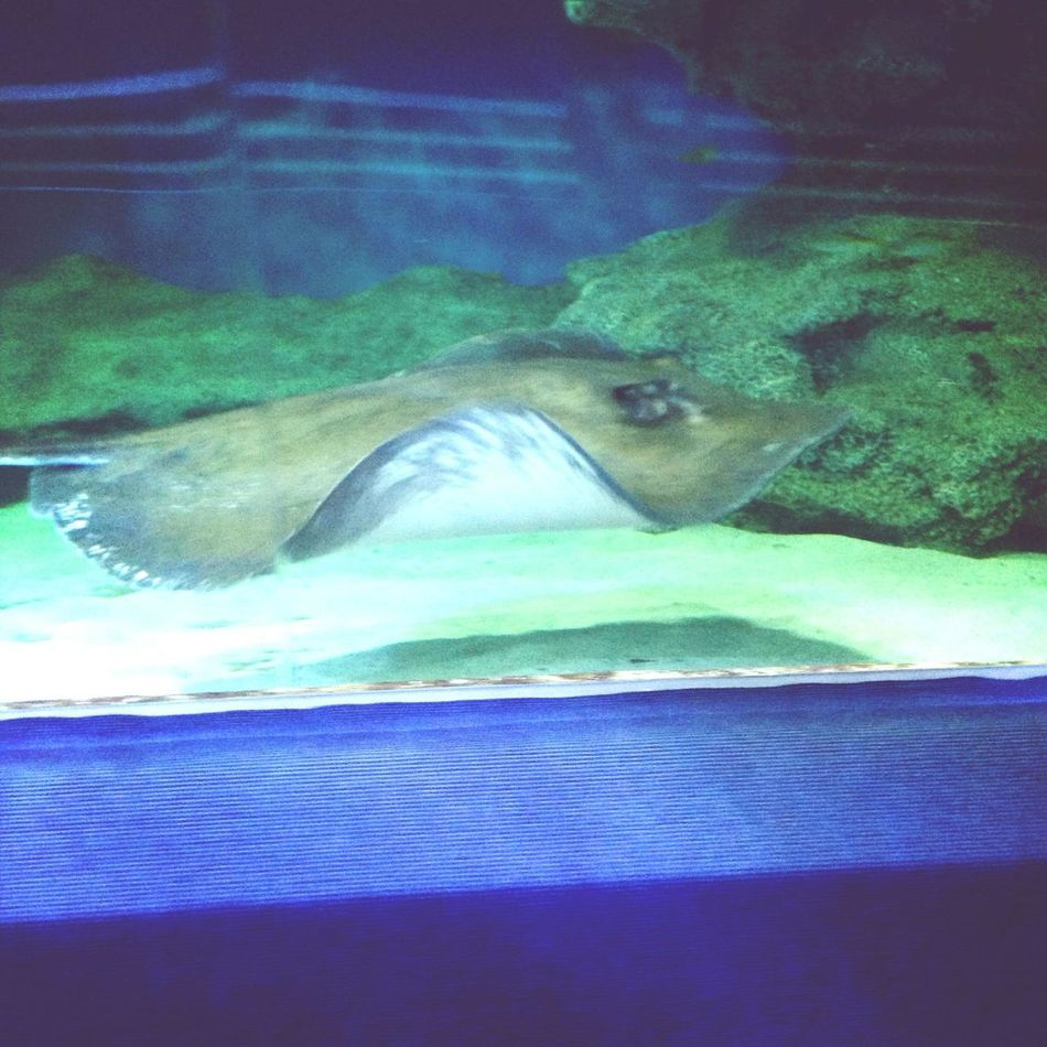 Sting ray! :D