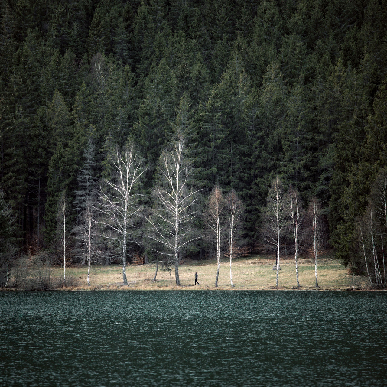 Forest Forest Photography Grass Green Color Lake Lake View Lakeshore Landscape Landscape_Collection National Park Nature Nature Photography Nature_collection Naturelovers Nautical Vessel People People And Places People Watching Person Tree TreePorn Trees Trees And Sky Walking Around Water