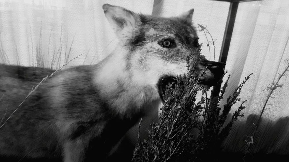 One Animal No People Close-up Nature Mammal Animal Themes