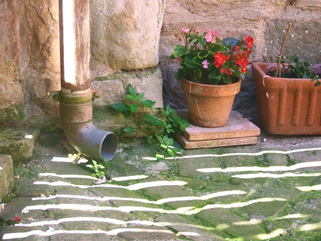 Close-up Cobbled Street Cobbled Street And Stone Wall Flower Flower Pots Gutter Leaf Plant Potted Plant Scum Scum Cobbled Street Spout Stone Wall Stone Wall And Flowers