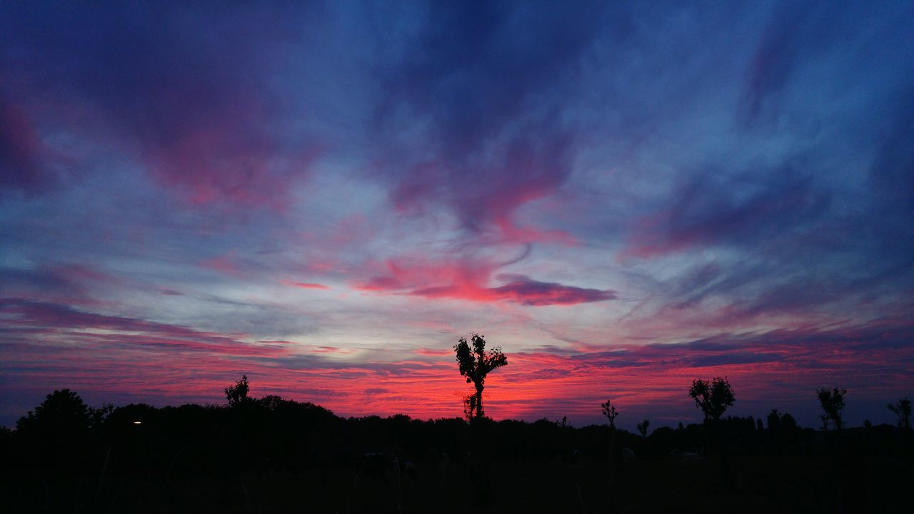 Breath taking sunset this night Lava Vulcano Sunset Cloud - Sky Beauty In Nature Nature Outdoors Garden Cows Sky Night Horizon Cloudscape