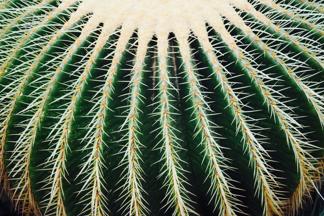 Backgrounds Beautiful Nature Beauty In Nature Botanical Gardens Cactus Cactus Close-up Copy Space Dangerous Day Desert Exotic Green Color Growth In A Row Nature No People Organic Organized Outdoors Plant Spikes Thorn