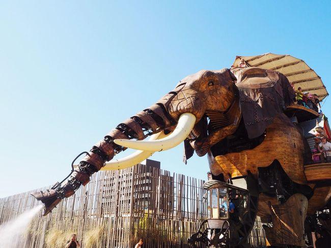 Avec Des Yeux D'enfant Elephant Machinesdelile Nantes Comme Pour De Vrai
