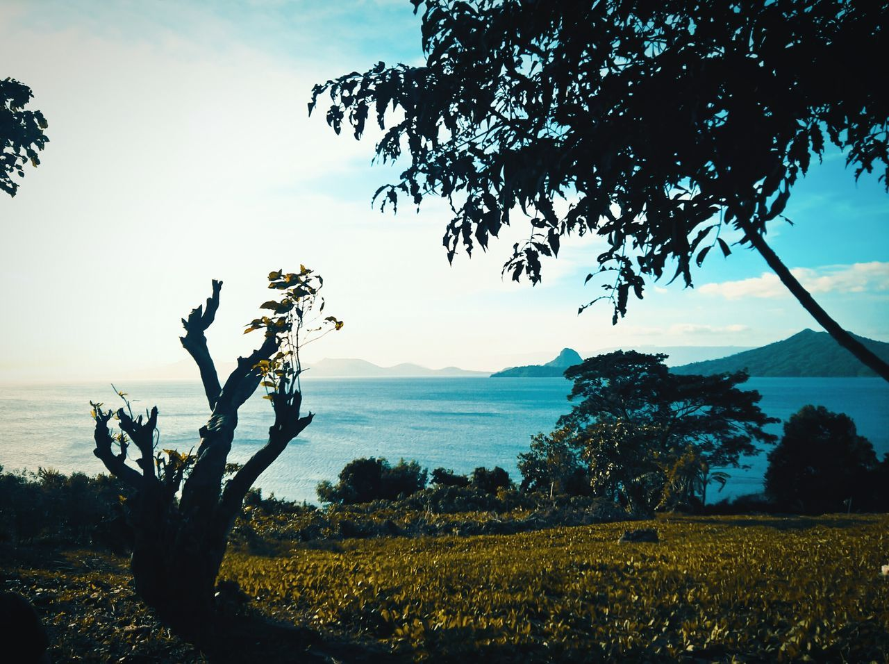 Taal Lake relaxing view. PhonePhotography TaalLake  Phone Photography Taal Volcano Tree Plant Landscape Horizon Over Water Batangas Philippines Orangeandteal Naturebeauty Beauty In Nature Philippines ❤️ Lumia640xl