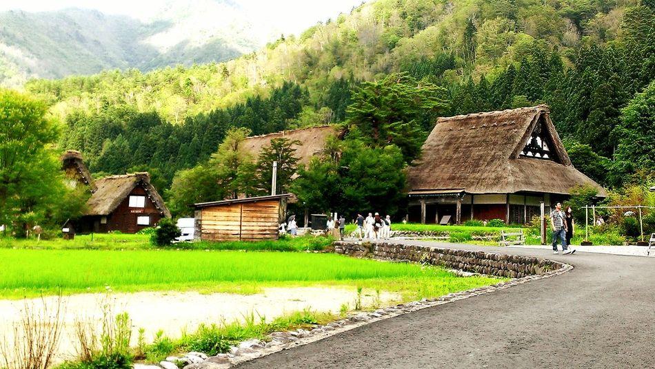 岐阜県、白川郷。のどか。 Taking Photos Hello World Hi! Enjoying Life Country Green Sirakawagou Gifu Japan Nature Naturelovers