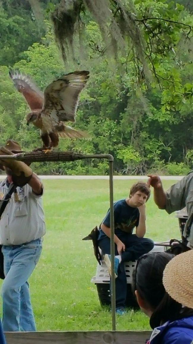 Birds of Prey Saturday