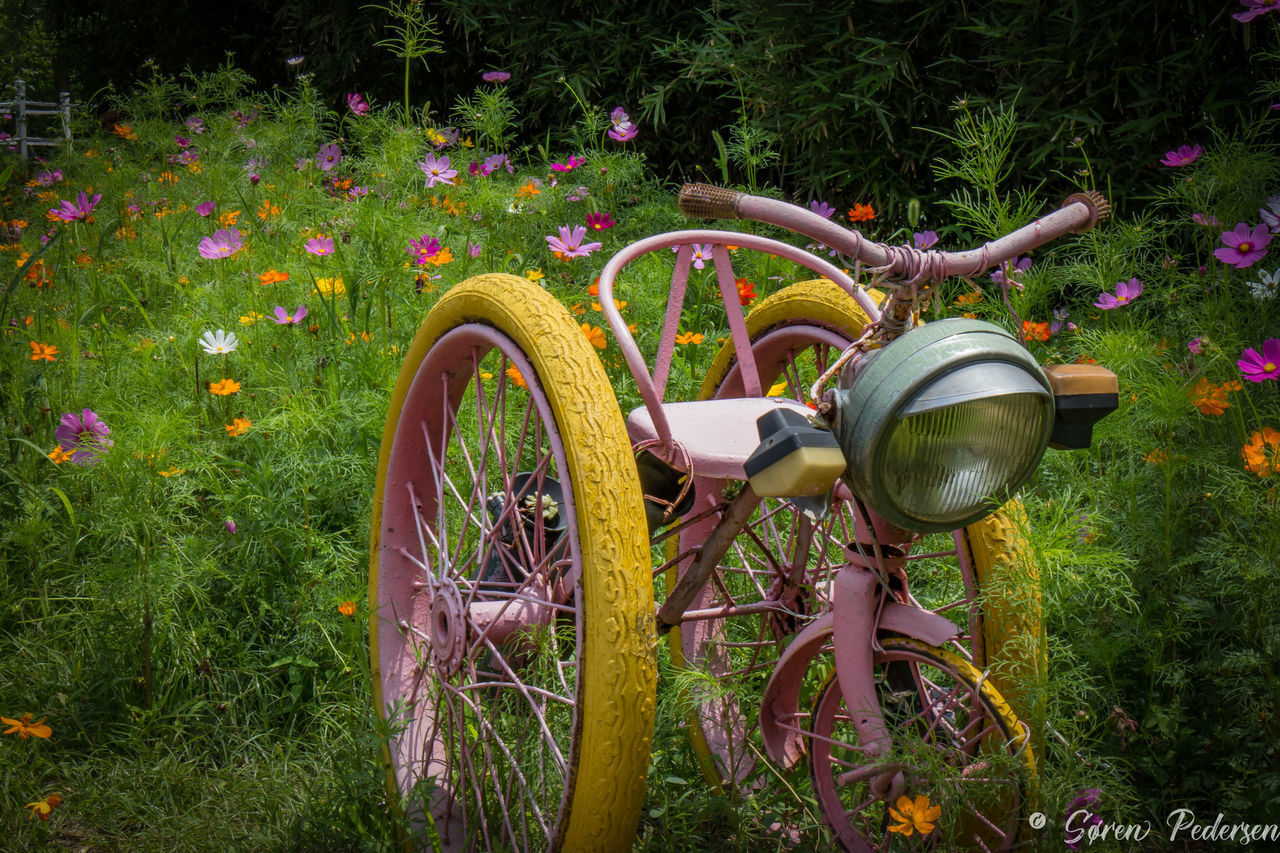 3 Wheeler 3 Wheels Beauty In Nature Bicycle Day Field Flower Freshness Grass Growth Land Vehicle Nature No People Outdoors Plant Stationary Transportation The Great Outdoors - 2017 EyeEm Awards
