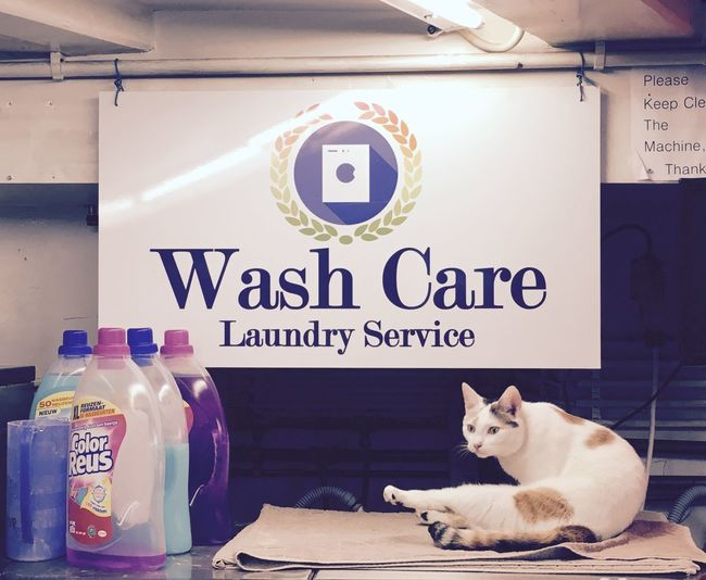 Capture The Moment Capturing Movement Cat Washingtime LaundryRoom Amsterdam Wash Care Check This Out