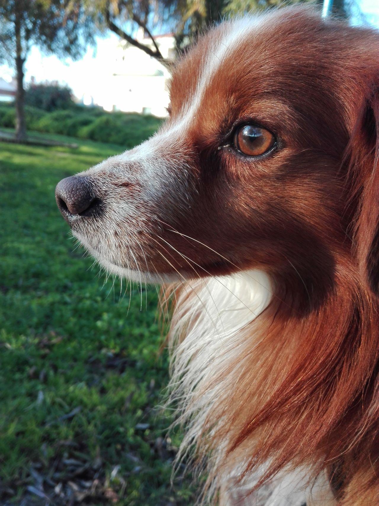 One Animal Animal Themes Nature DogLove Doggy Love Dogoftheday Dogs Of EyeEm Dog❤ No People Dog Life Close-up Mammal Dog Collection Rex Dog Pets Domestic Animals Man Bestfriend