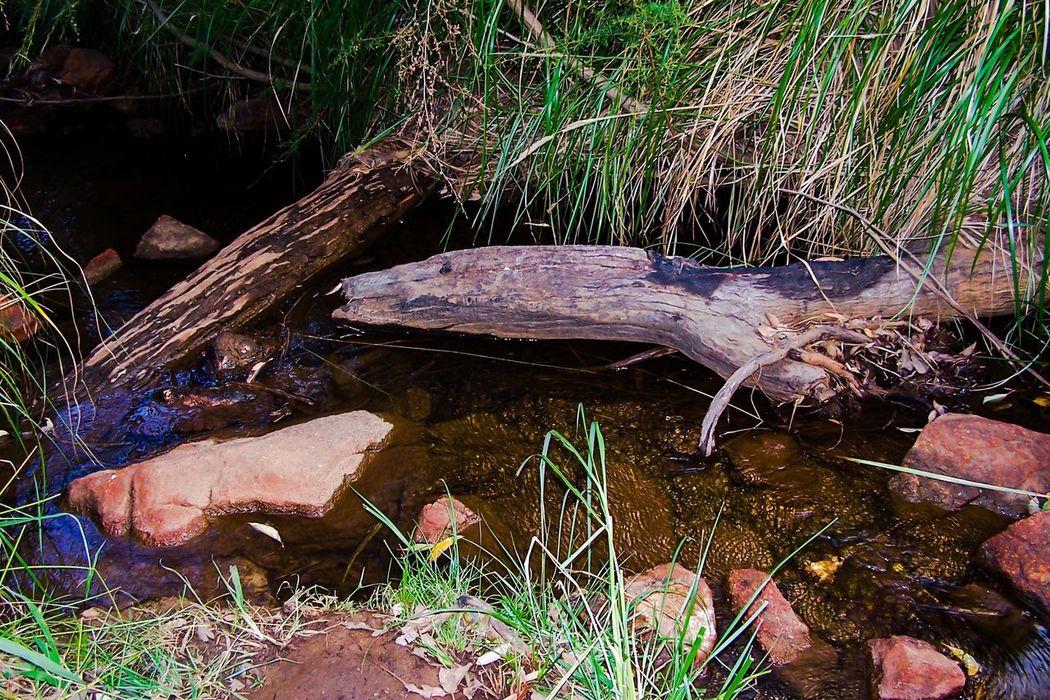 Landscape_photography Water Reflections Reeds Lesmurdie Falls Wilderness WesternAustralia