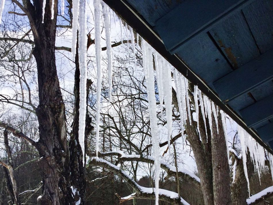Eye Em New Here Low Angle View Bare Tree Day Nature Outdoors Sky Icicles Hanging