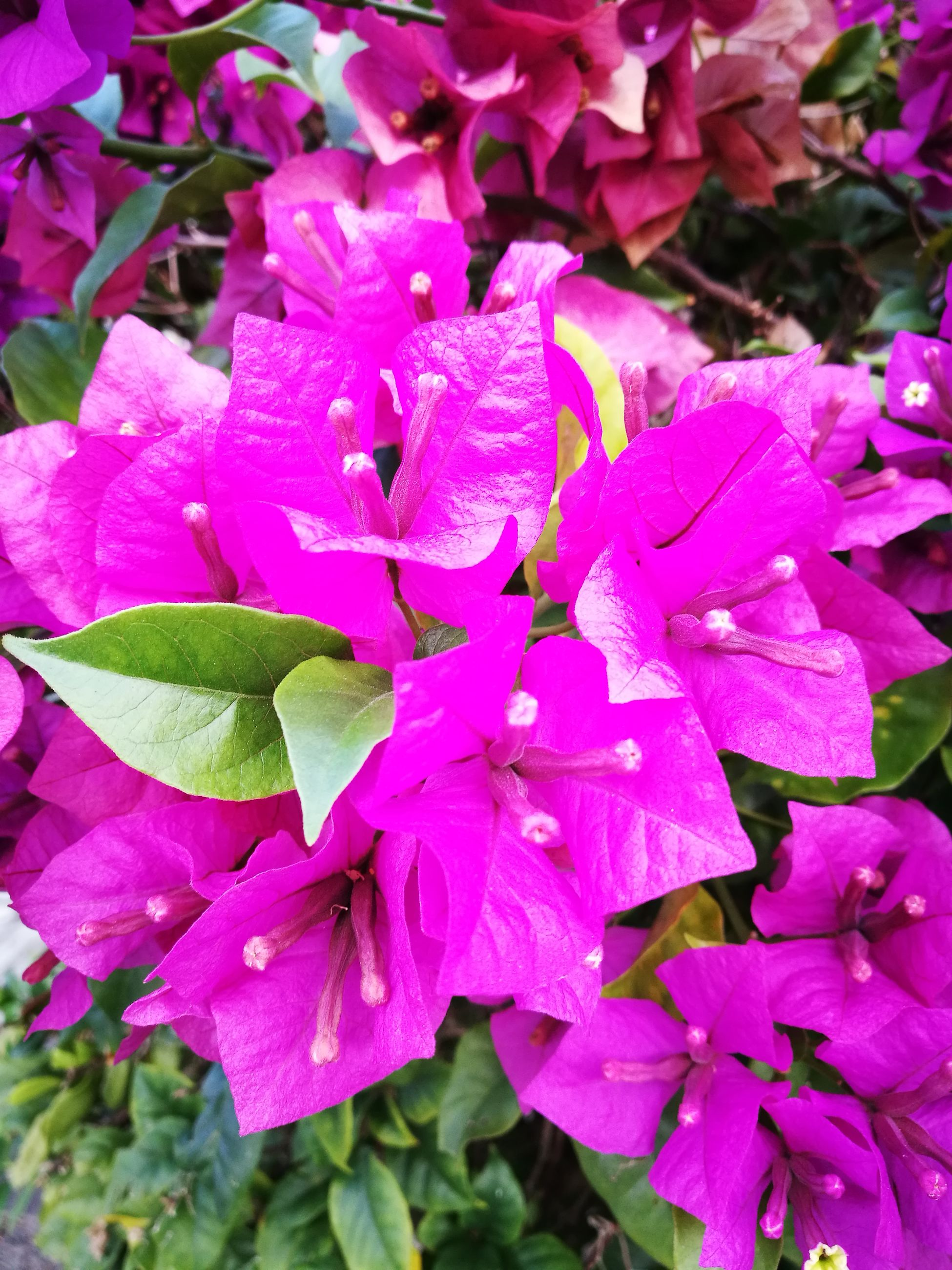 Flower Nature Pink Color Morning Walk Collection