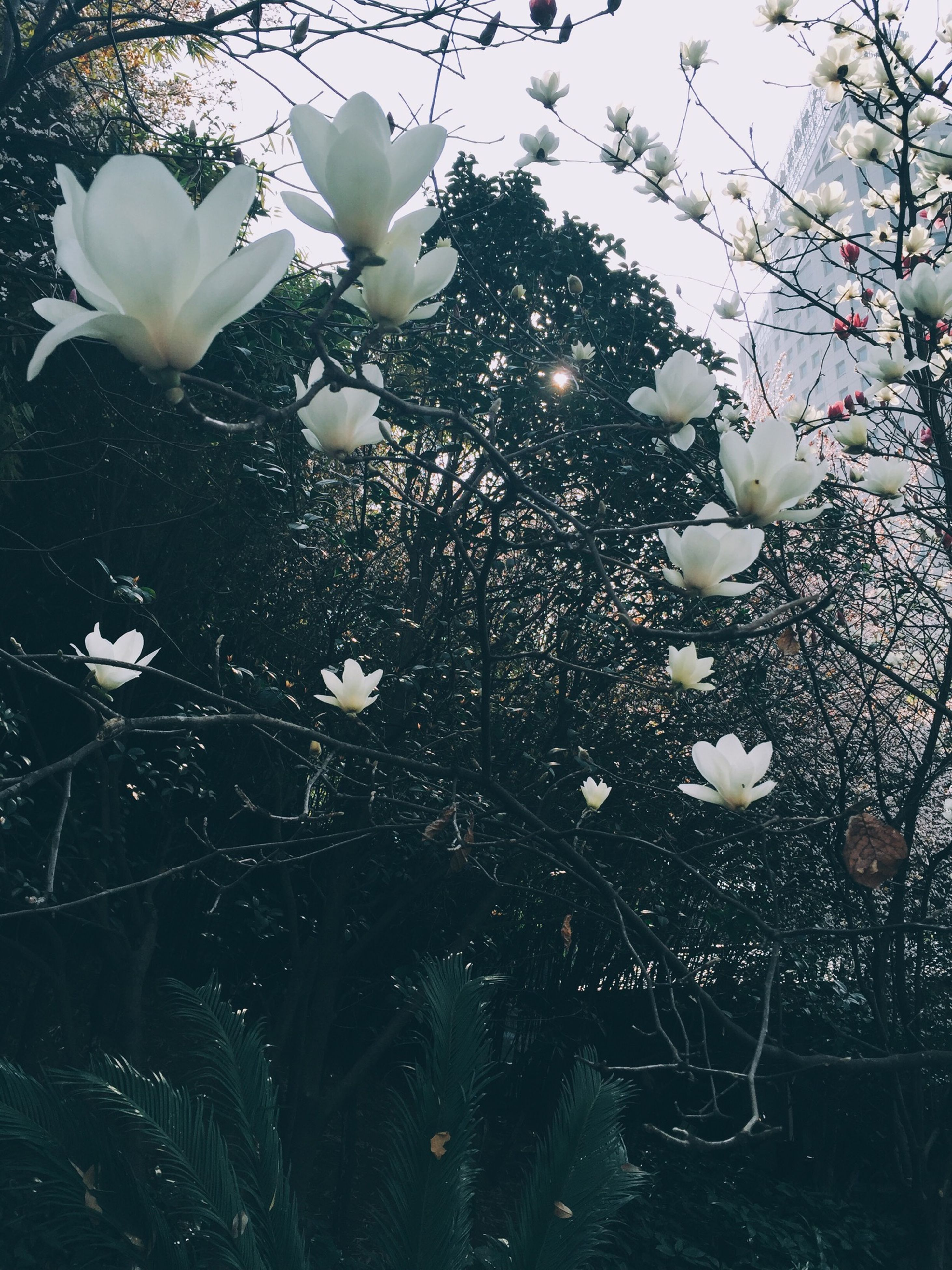 flower, growth, fragility, freshness, white color, beauty in nature, petal, nature, blooming, plant, flower head, blossom, in bloom, close-up, branch, botany, springtime, outdoors, season, day