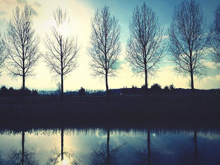 Beautifull trees next to a canal with the sun in the background. Trees Canal Sun