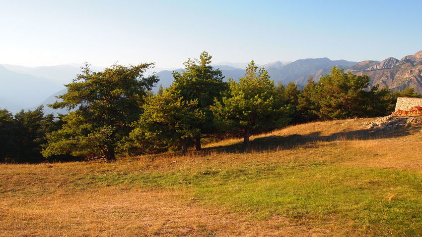Peaceful nature Tree Nature Wild Panorama View Mountain Mountain Range Rough Warm Colors Simplicity Beauty In Nature Quiet Calm Scenic France Alps Utelle No People Outdoors Landscape EyeEm Gallery EyeEm Best Shots Eyeemphotography Life The Great Outdoors - 2017 EyeEm Awards