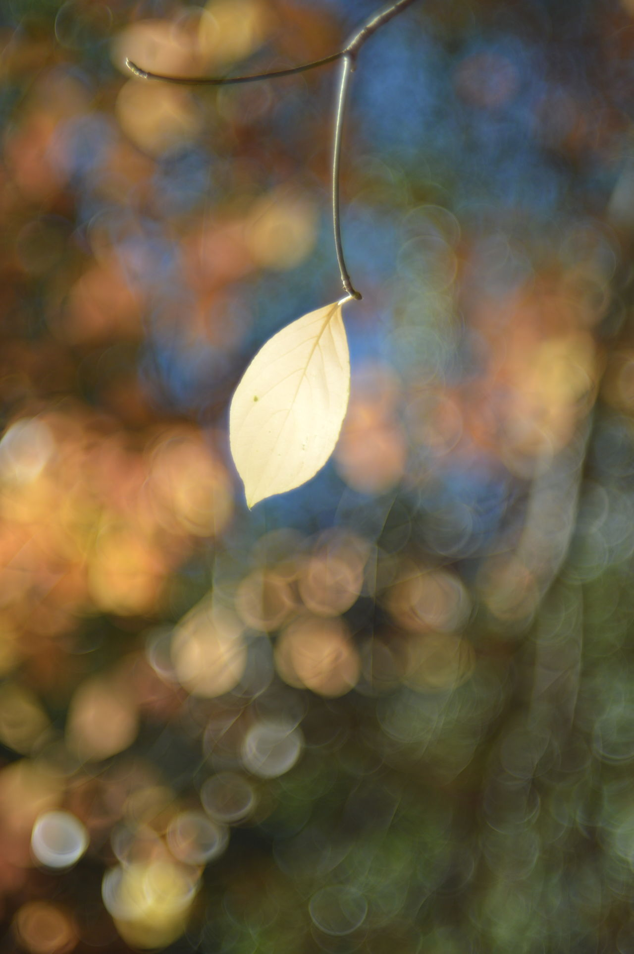 Last Leaf Dogwood Leaves Autumn Colors Autumn Palomar The Purist (no Edit, No Filter) Helios 44-2