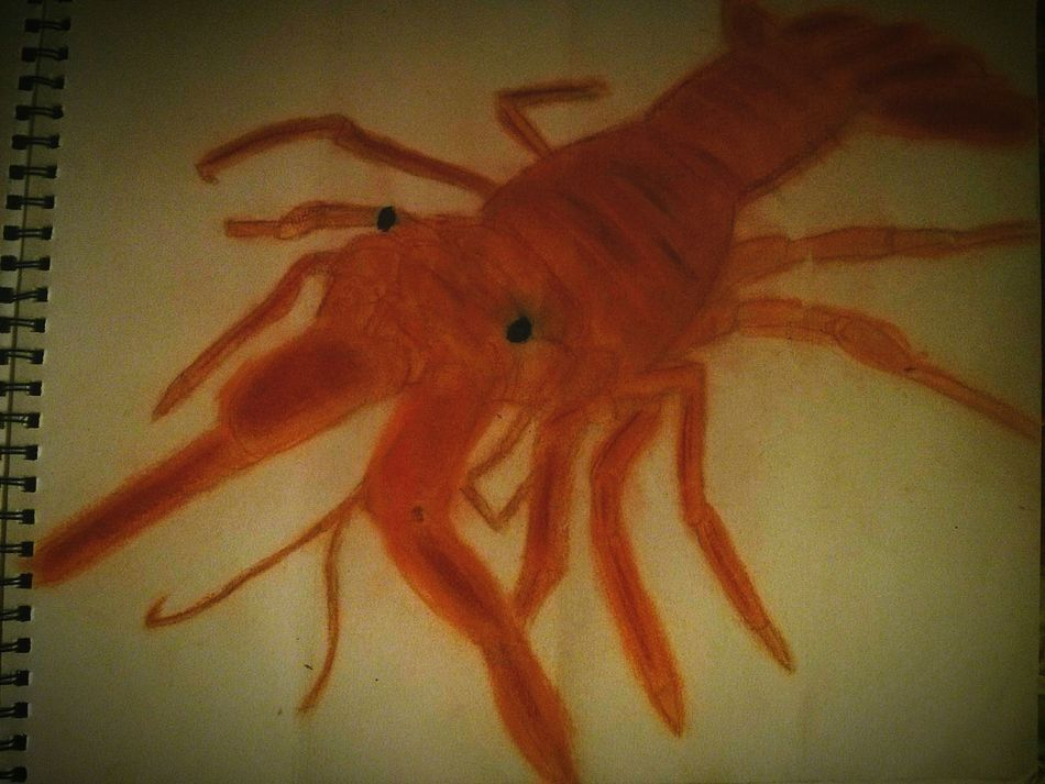 My Brother's Drawing With Chalk A Lobster Just Having Fun Taking Pictures Check This Out Doyoulikeit? Orange Chalk Not My Drawing