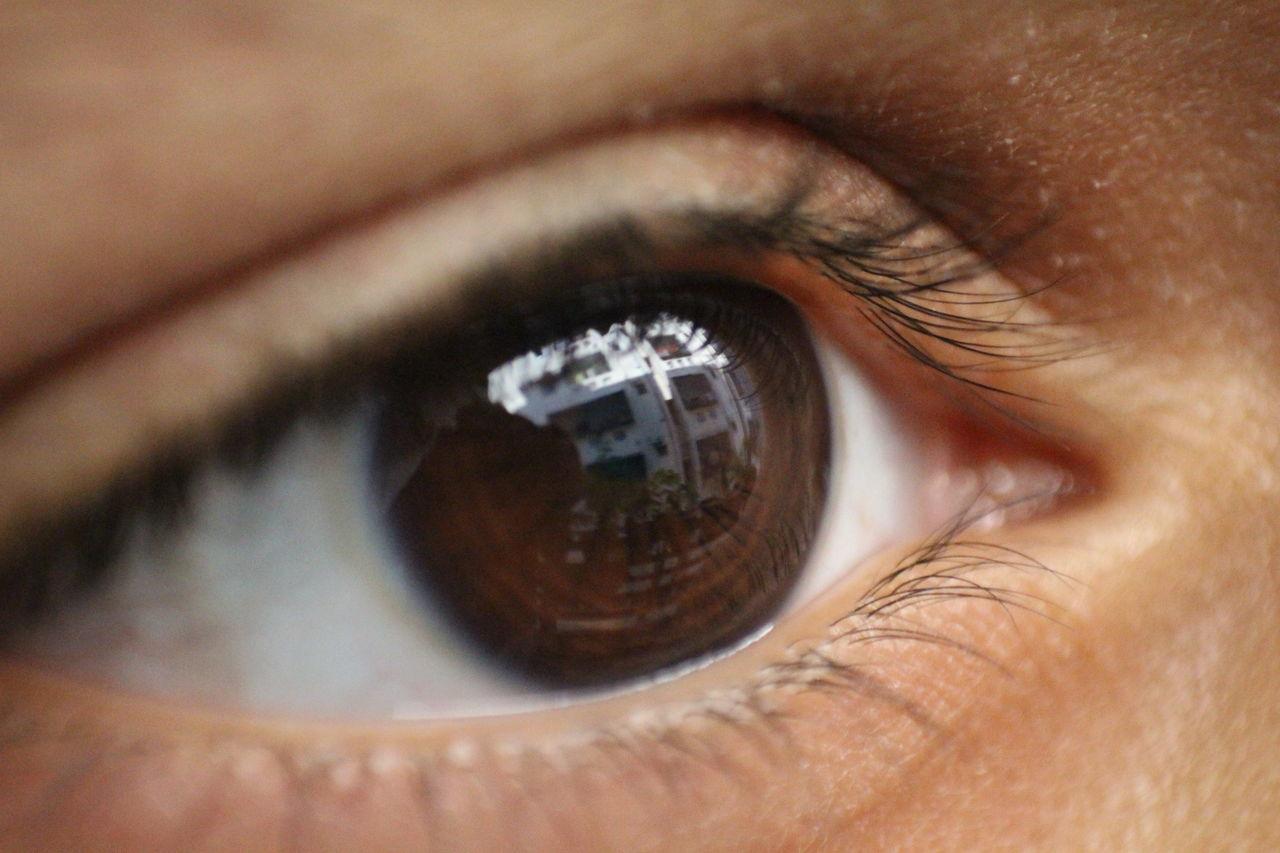 human eye, eyesight, sensory perception, eyelash, human body part, one person, real people, eyeball, close-up, vision, looking at camera, full frame, iris - eye, indoors, portrait, day, people