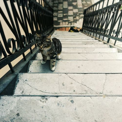 Vscocam Animal Cat Cat Lovers